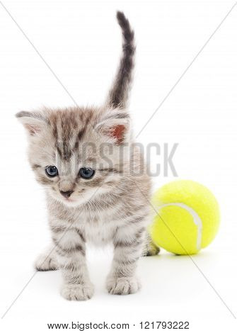 Kitten Playing With Ball