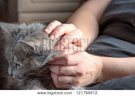 Cute gray cat resting on laps of women