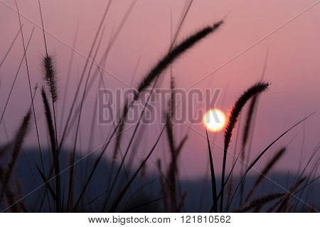 Natural background view of sunset and pampas.