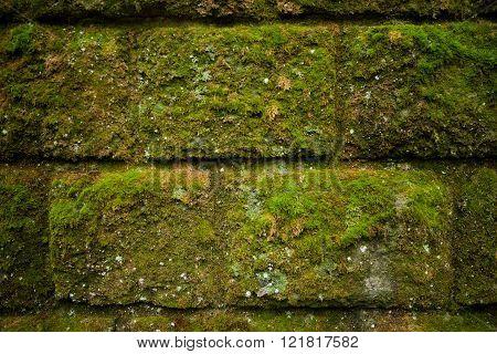 Moss On Stone Wall
