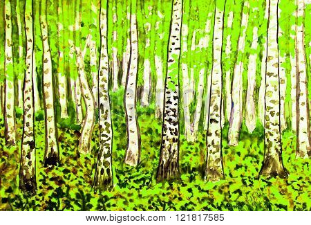 Hand painted picture watercolours landscape - birch forest in summer