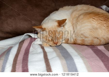Cat Sleeping On Striped Plaid
