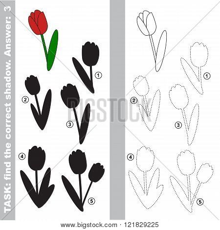 Tulip with different shadows to find the correct one. Compare and connect object with it true shadow.