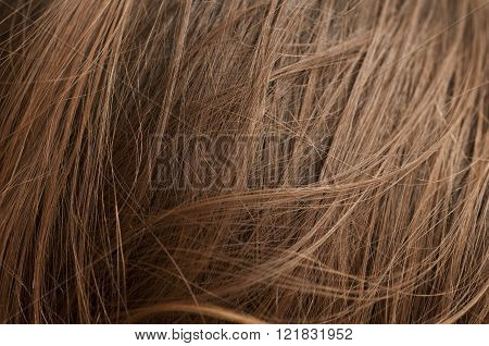 Chestnut Natural Hair
