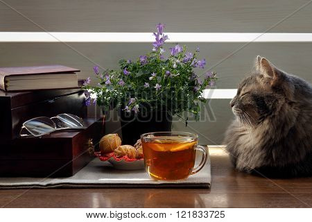Home comfort - a cat, a cup of tea with lemon, book