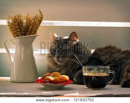 A large, gray cat, coffee