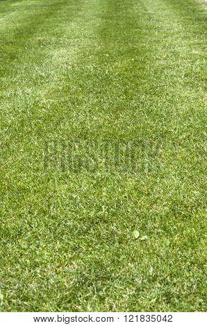 Green grass texture from a football field
