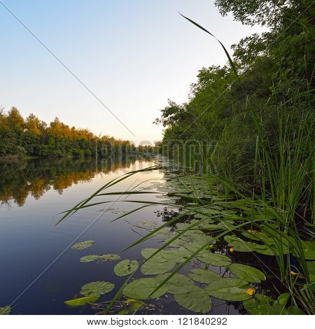 Beautiful view of the river with reeds and yellow lily in the evening