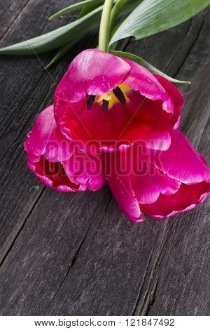 Pink Tulips On A Dark Wooden Background
