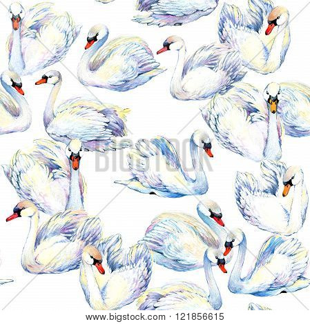 Swan. Swan Watercolor drawing. Swan flock. watercolor textured background. Watercolor bird. Watercol