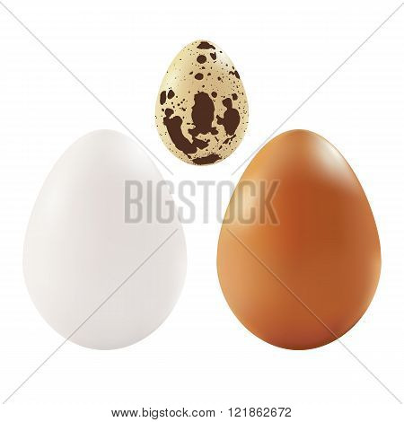 Isolated chicken and quail eggs on white background