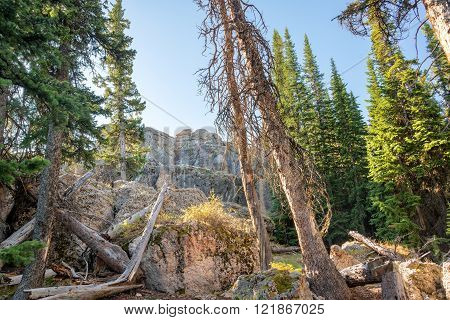 Forest with large boulders at High Park Lookout in Wyoming