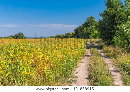 Earth road on an edge of agricultural field