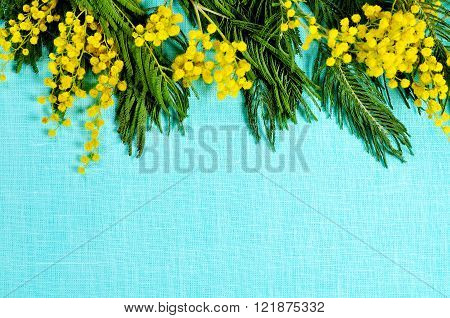 Bright yellow fluffy mimosa on the turquoise linen surface. Natural spring background with copy space. Selective focus at the mimosa.