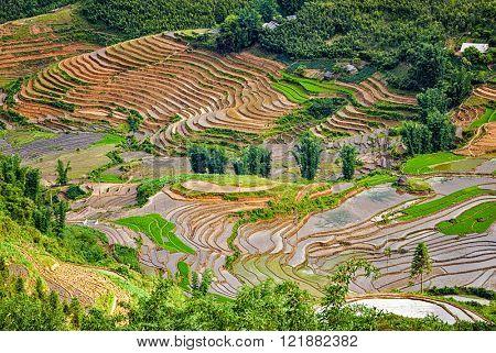 Rice field terraces (rice paddy fields). Near Cat Cat village - popular tourist trekking destination. Near Sapa, Vietnam