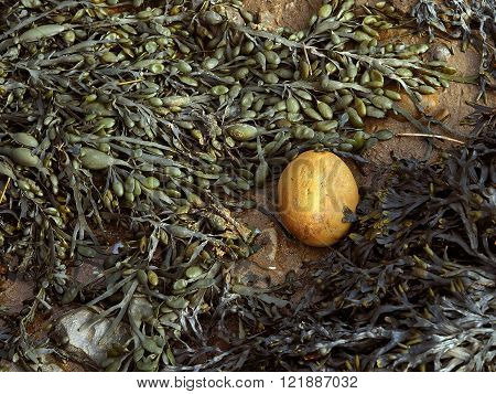 Seaweed and egg shaped stone on sand