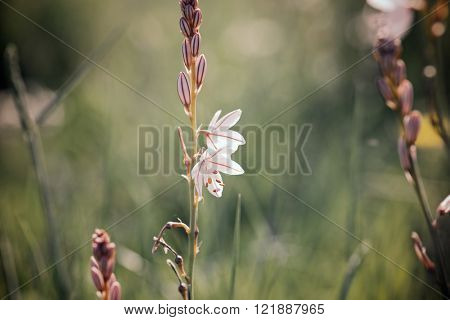Wild flower close up in Zaragoza Province, Aragon, Spain.