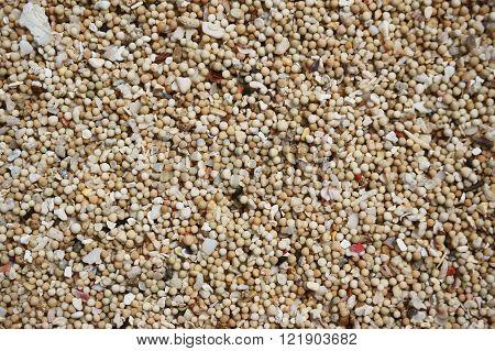 Sea sand close up