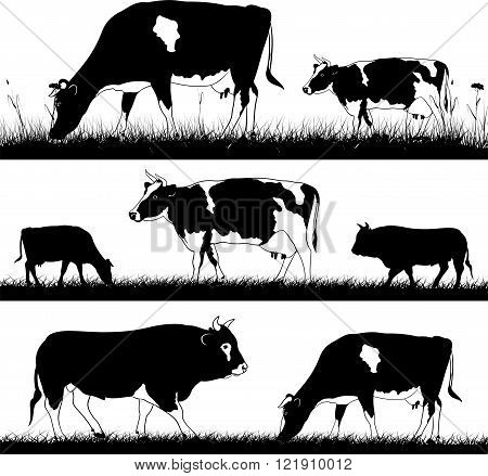 vector silhouettes of cattle in the meadow