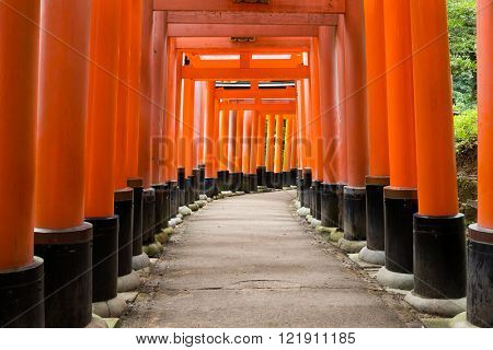 Torii of Inari Shrine
