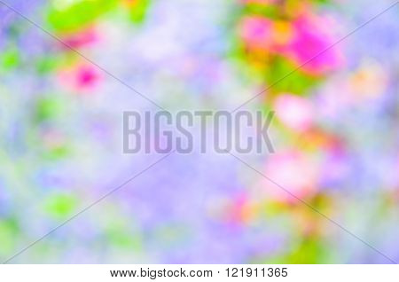 Cosmos flower (Cosmos Bipinnatus) with blurred background selective focus