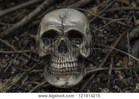 human skull in forest darkness concept; horror halloween