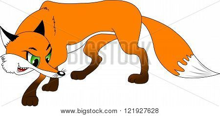 sly red fox for a walk vector and illustration
