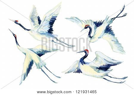 Watercolor flying crane bird set. Hand painted traditional illustration