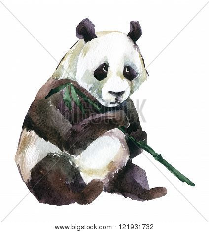 Giant panda with bamboo watercolor illustration isolated on white background