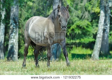 Full length portrait of looking at camera heck horse at green forest background
