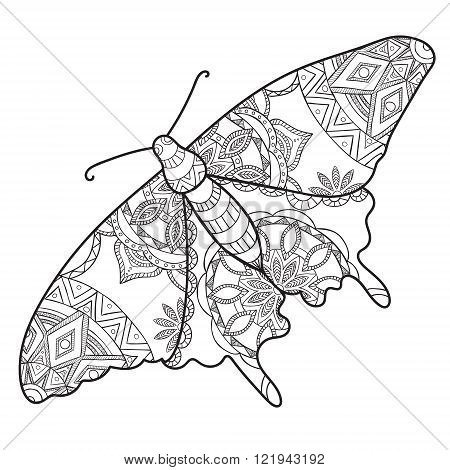 Detailed ornamental sketch of a moth