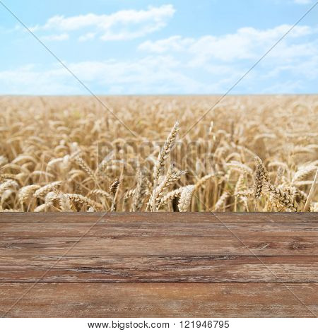 agriculture, farming, cereal, land cultivation and texture concept - field of ripening wheat ears or rye spikes with wooden boards