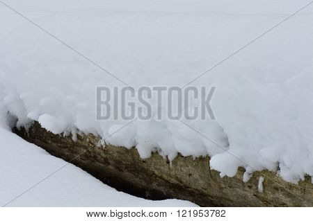 Wood trunk of the fallen tree under white snow cover