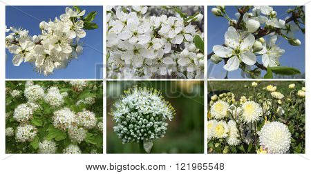 Collage photography with white flower on branch in spring season