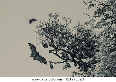 Bats in the royal botanical garden in Sri Lanka