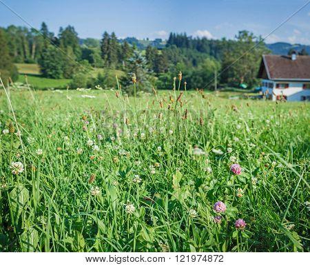 Beautiful meadows. Austria
