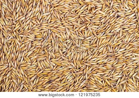 Background from a crude closeup of oats