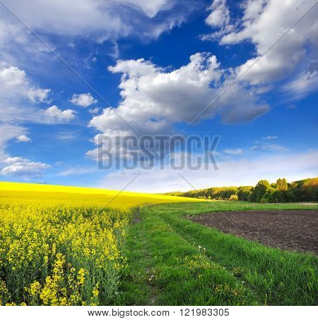 Countryside landscape with yellow rapeseed field and the sky with clouds