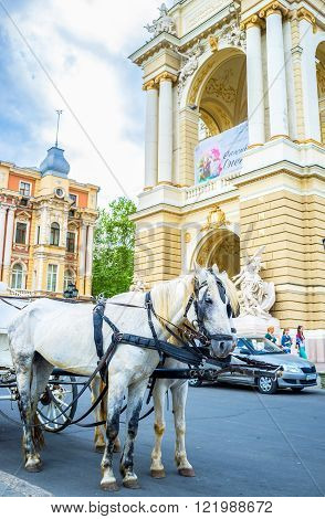 ODESSA UKRAINE - MAY 17 2015: The carriage horses are waiting for the tourists on May 17 in Odessa.