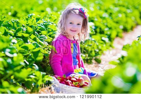 Child picking strawberries. Toddler kid eating ripe healthy berry. 