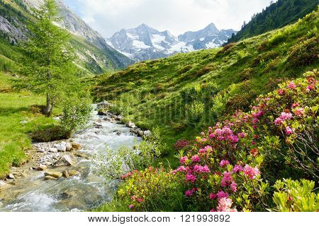 Mountain landscape with wild brook and rhododendrons in spring