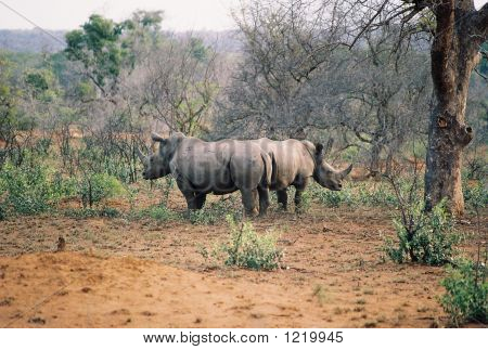 Rhino Bookends 1