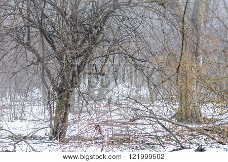 Foggy Weather In Winter. Horizontal Winter Scene Of Leafless Trees In Foggy Forest..