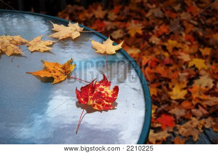 Table In Autumn