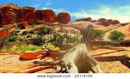 Old Pinyon Pine
