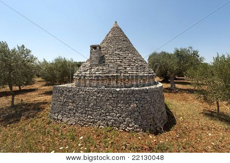 Murge (puglia, Italy) - Trullo And Olive Trees