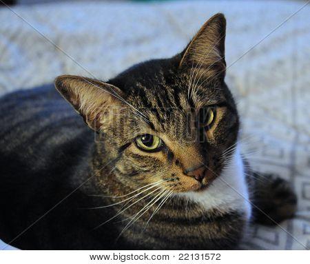 Pepper, the cat