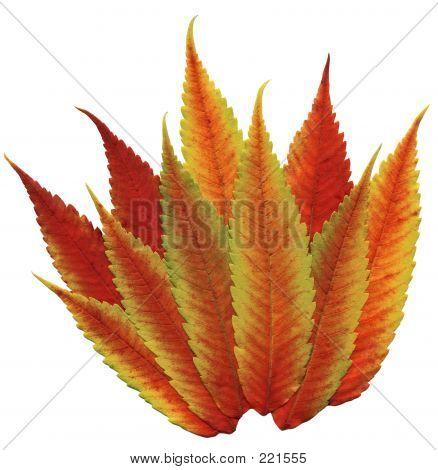 Fall Flaming Foliage