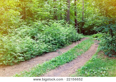 Small rural road running through green summer forest