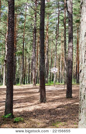 Bsketball hoop in summer forest